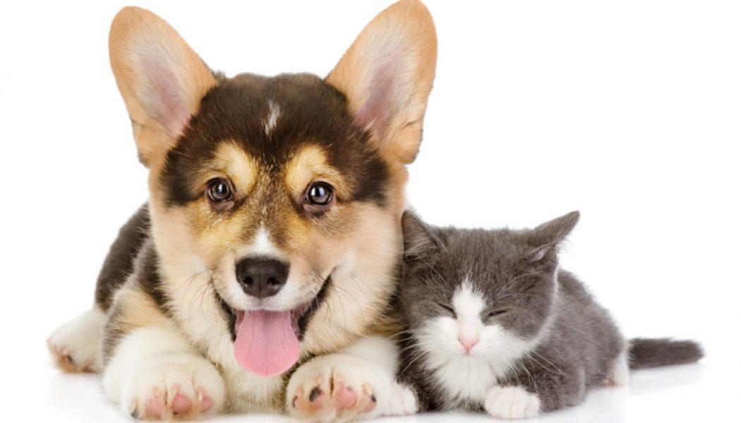 Los Roles Espirituales de Nuestras Mascotas